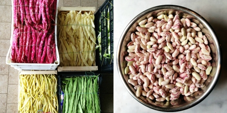 beans-in-Italy